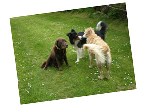 Dinas Dogs - North Pembrokeshire