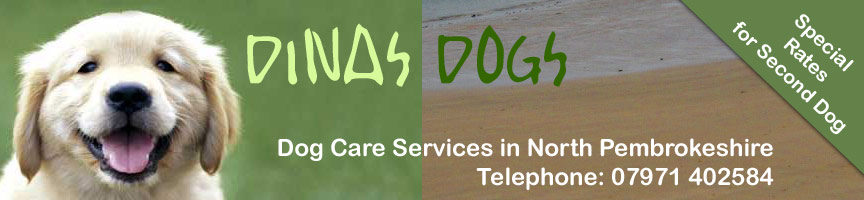 Dinas Dogs - Dog Care Services in North Pembrokeshire